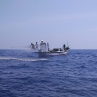 Pic 1 - A pole and line fishing operation in action