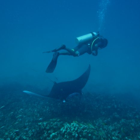 BRM_Andaman_Citizen-Science_Diver&Manta_MahimaJaini